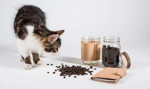 bradley mountain coffee tennyson notebook cat