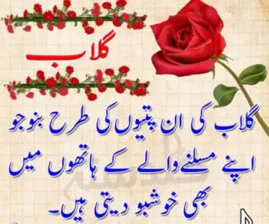gulab shayari images,gulab urdu shayari,hindi shayari on rose,gulab ka phool urdu poetry,ek gulab shayari,phool shayri,gulab ka phool wallpaper,funny shayari on gulab ka phool
