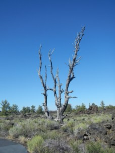 Petrified Tree in Craters of the Moon