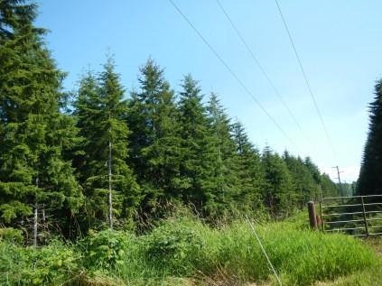 Forest Washington Coast