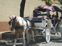 Horse and buggy downtown san antonio