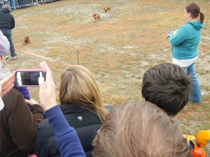 Wiener Dog Races at Scarecrow Fest St. Charles IL