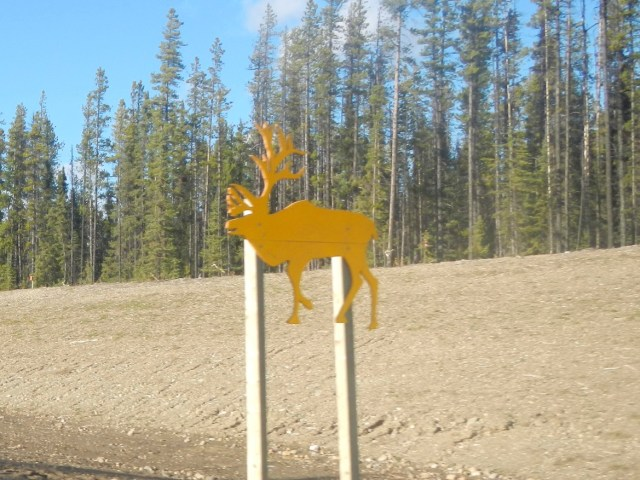 Caribou Crossing - Canadian Road Signs Photo 2