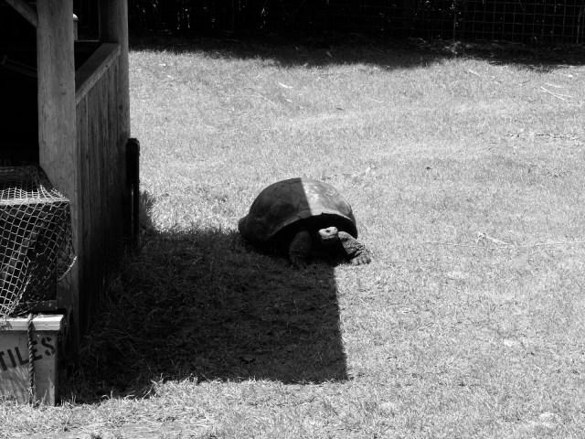 #FriFotos #Shadows