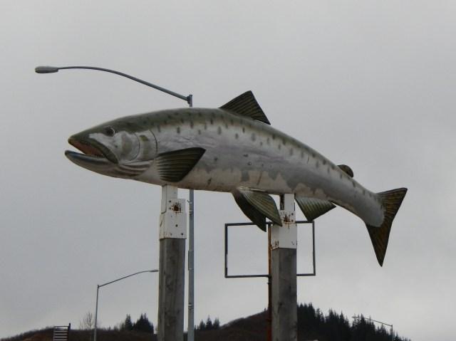 Giant  Salmon Valdez Ak
