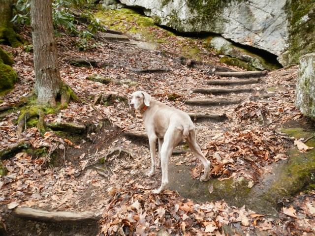 Follow me to the Elk River falls
