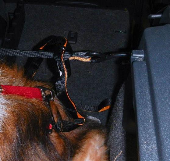 Kurgo leash hooked onto zip line