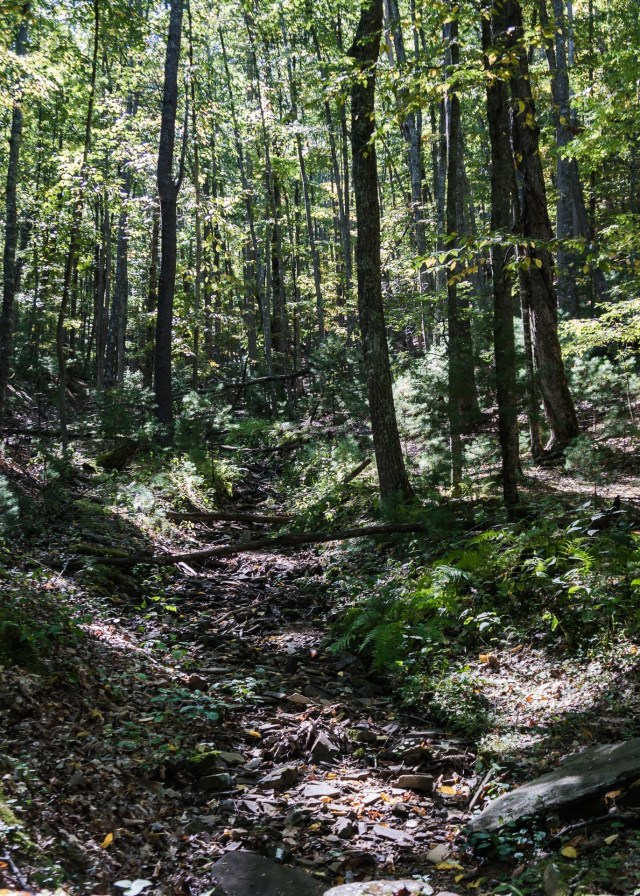 Watoga State Park Hiking Trail