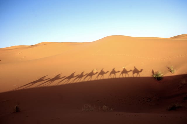 Sahara desert with camel shadows
