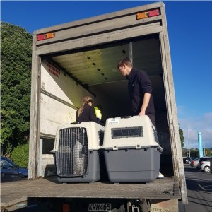 Now365 Logistics successfully transports an adorable live animal shipment!