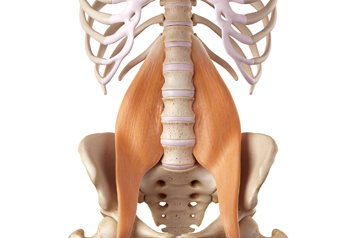 Release the Psoas Muscle at The Core Zone Banbury