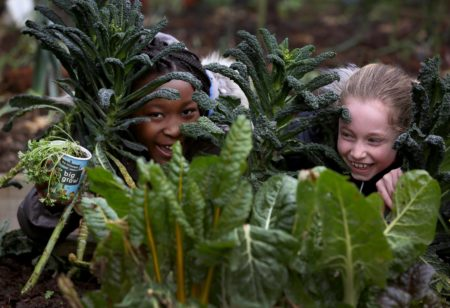 innocent and GIY 'Big Grow' Kits now available for primary schools