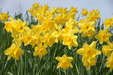 """The people of Cork have always been incredibly generous in their support of Daffodil Day"""