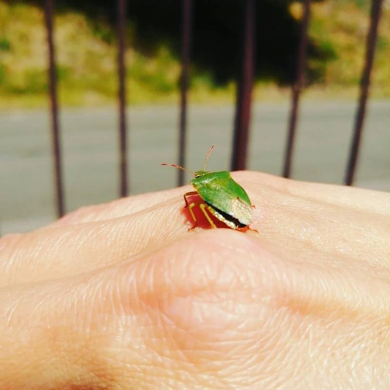 tiny bug
