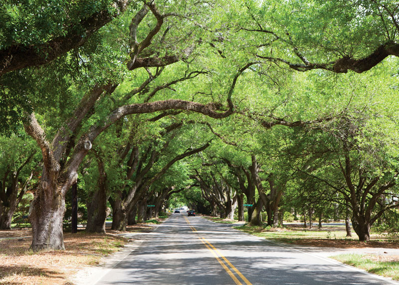 Explore Equestrian Culture And Beautiful Urban Forests In
