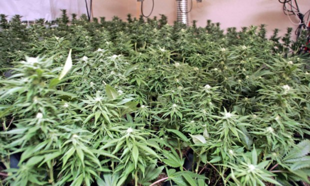 A cannabis factory was discovered by police in Auchtermuchty