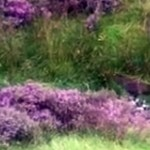 VIDEO: Guess what a walker found dumped in this remote hillside stream