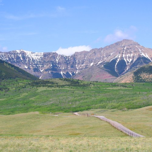Buffalo Paddock off Highway 22 north of Waterton