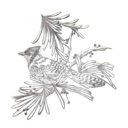 Bird Design Picture