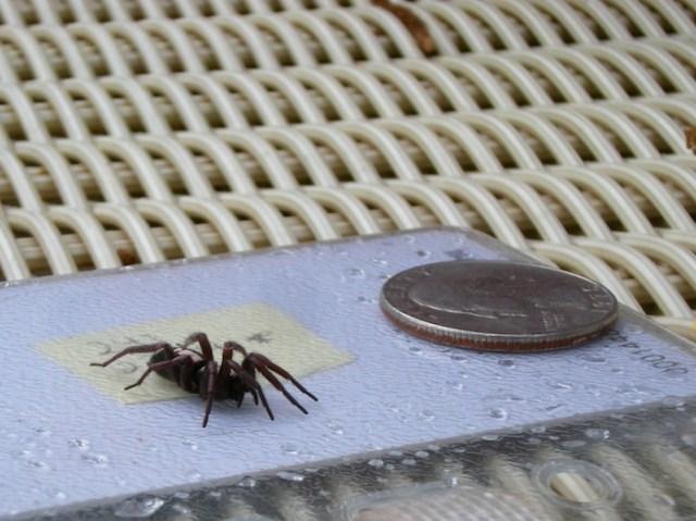 parsons_spider
