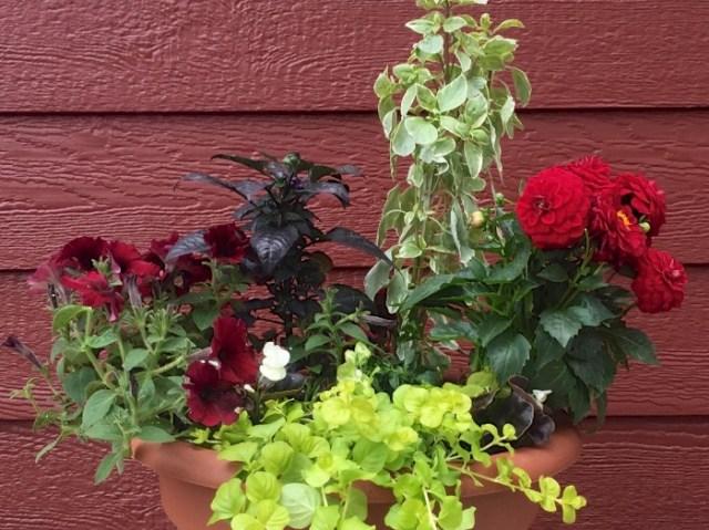 potted_plant_closeup