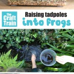 Raising Tadpoles Creating An Observation Tank The Craft Train
