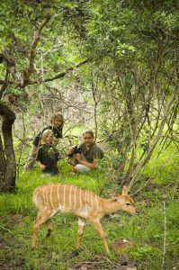 Family Safari at Phinda Private Game Reserve, South Africa.