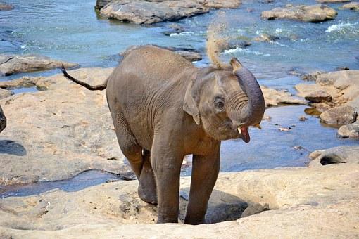 Sri Lanka, the land of wonders!