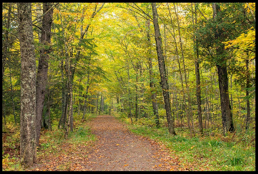 Mission photo of a path way through forest in Jay Cooke State Park Minnesota
