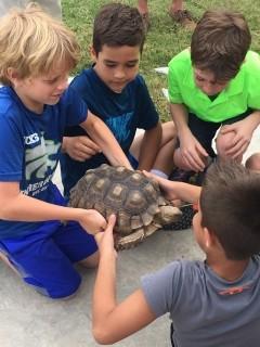 Sheldon - African Spurred Tortoise