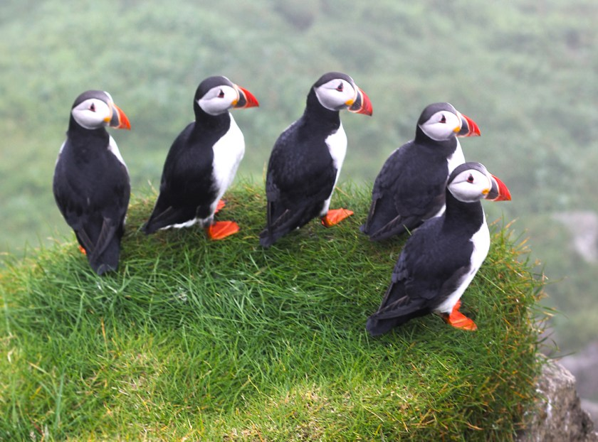 Puffin Island Iceland Map