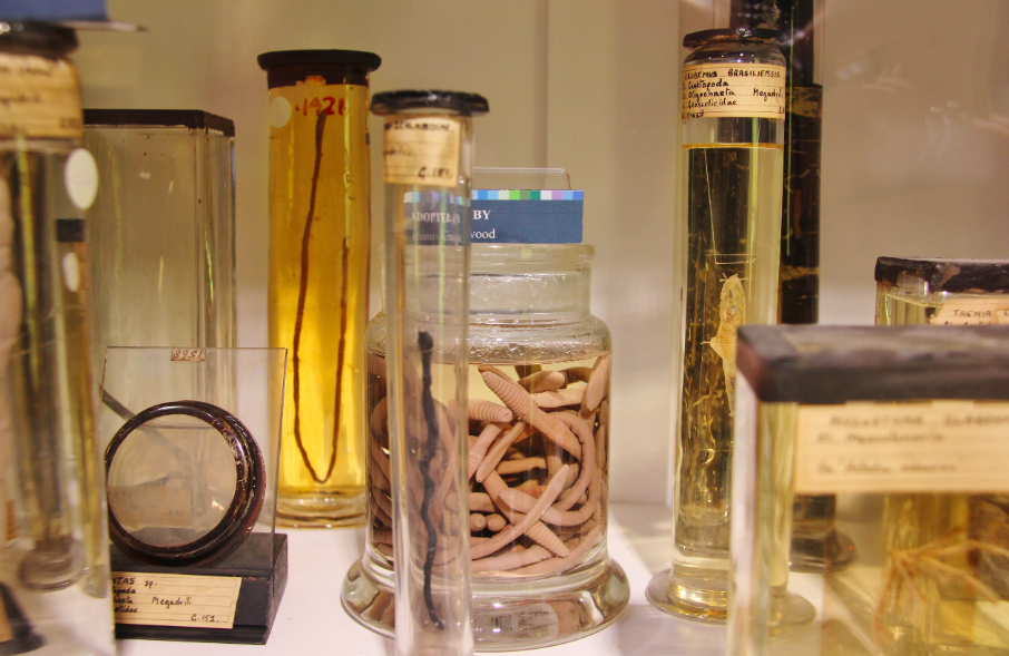 Grant Museum of Zoology - London's quirkiest museums