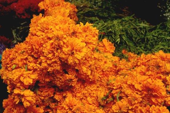 flowers_aztecmarigold