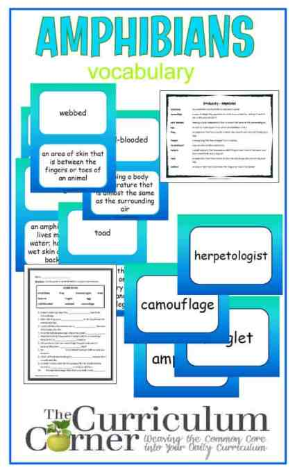 Amphibians Vocabulary Resources free from The Curriculum Corner