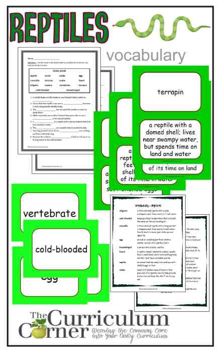 Reptile Vocabulary Resources from The Curriculum Corner FREE