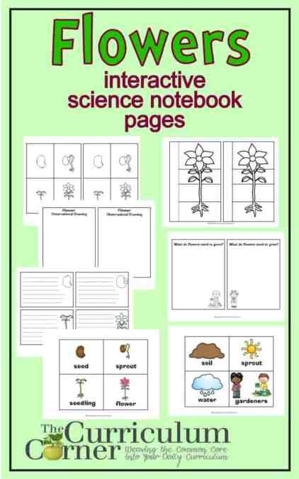 Flowers: Interactive Science Notebook Pages FREE from The Curriculum Corner | FREEBIE