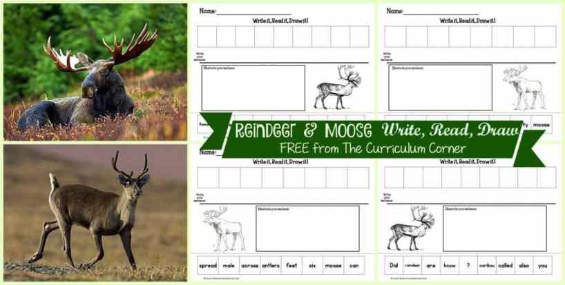 FREEBIE Reindeer & Moose Read, Write, Draw Literacy Center Activities from The Curriculum Corner