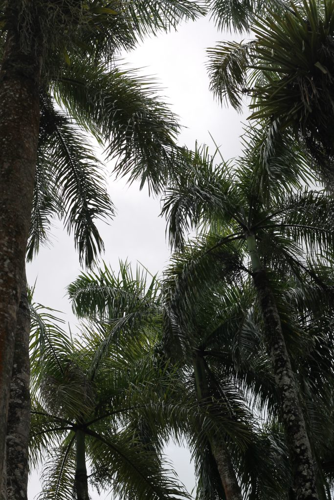 Palmentuin Suriname