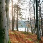 Trees on Lakeshore, November, Sunburst between Trunks