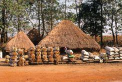 Guinea Blog-Optimized070