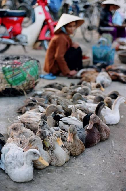 Vietnam 019
