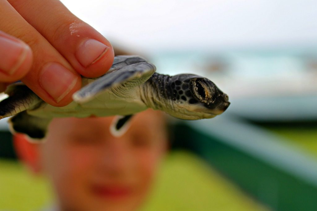 Helping sea turtle conservation efforts in Cancun, Mexico.