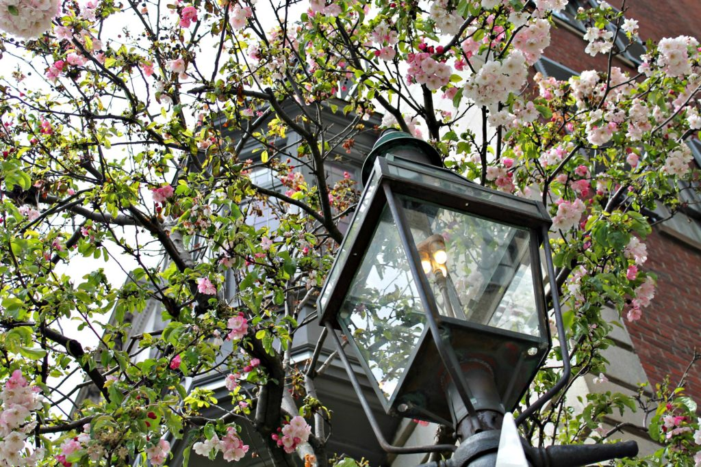 A Beacon Hill charming gas lamp