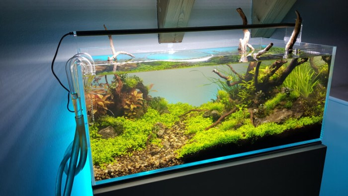 Simple Aquascaping Ideas - Aquascape Ideas
