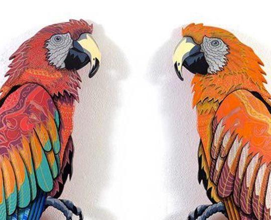 Twice Barcelona Parrots Julien Deniau