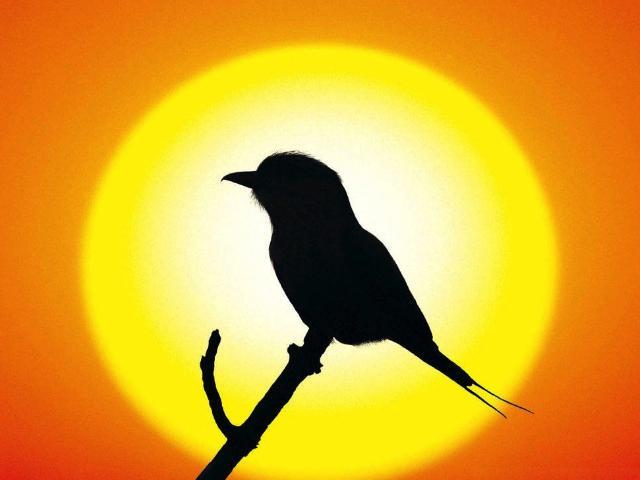 Faith Is The Bird. . .