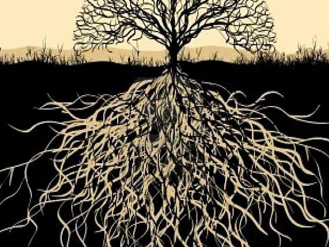 Roots and Growth. . .