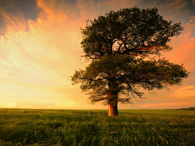 Like Nature. . .