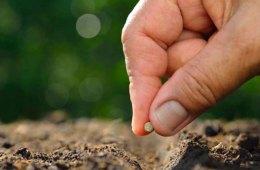 Seeds. . .