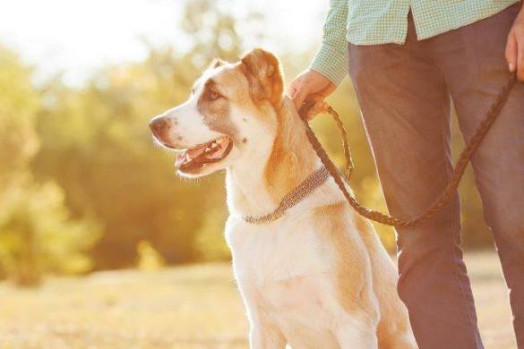 Pets | Pet Lovers | Melbourne | Dog Parks | Wellbeing | Happiness | The Daily Fluff
